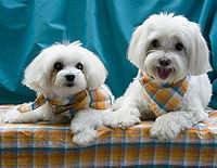 Болонка клички для собаки